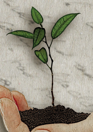 a seedling that symbolizes the growth of an organization